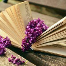 cropped-book-759873__3401.jpg