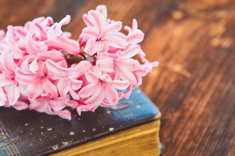 hyacinth-744043_960_720