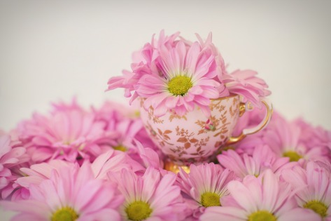 pink-daisies-2121593_1920